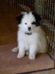 Puppy23 small